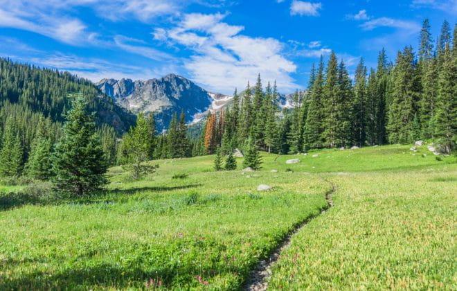 Trail through mountain meadow