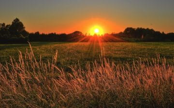 sunset through grass meadow