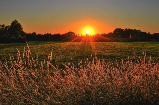 sunset through grass meadow